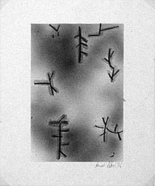 Untitled [Monash 8.2] 1976 [W:P]